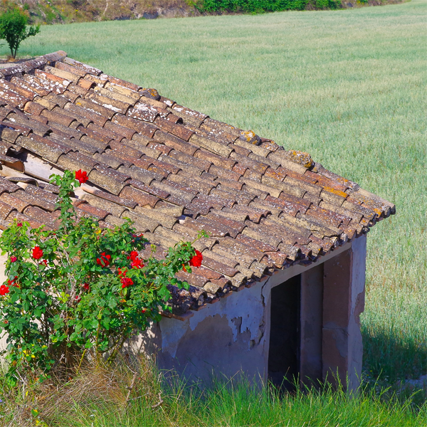 territorio competitividad rural